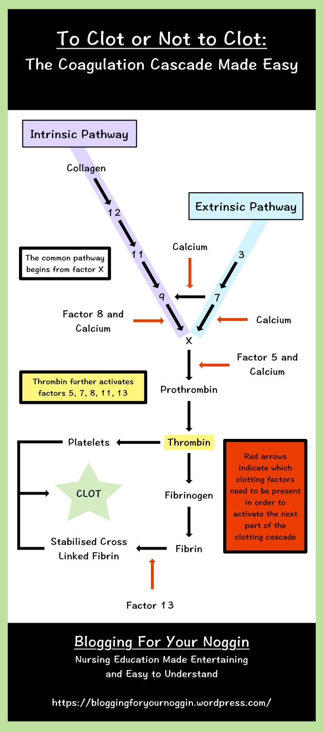 clotting cascade intrinsic extrinsic pathway